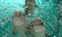 дельфинарий клайпеды