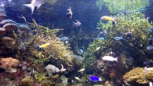 oceanarium1