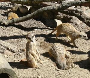 oliwa-zoo